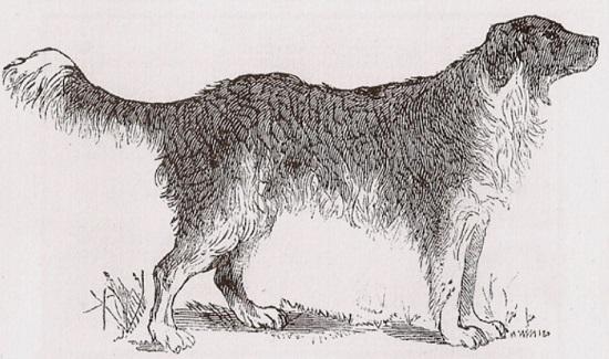 [Image: dogsketch.jpg]