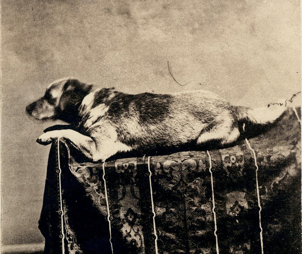 Fido Abraham Lincoln S Dog