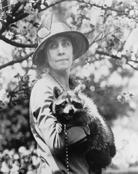 [Image: raccoonpicture.jpg]